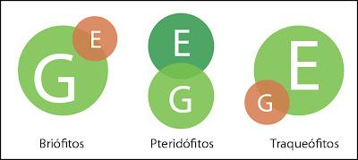 diagrama Esquema de las relaciones entre gametofito y esporofito en plantas y briofitos