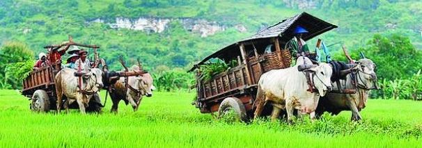 Contoh Usaha di Desa Dengan Modal Kecil Menjanjikan