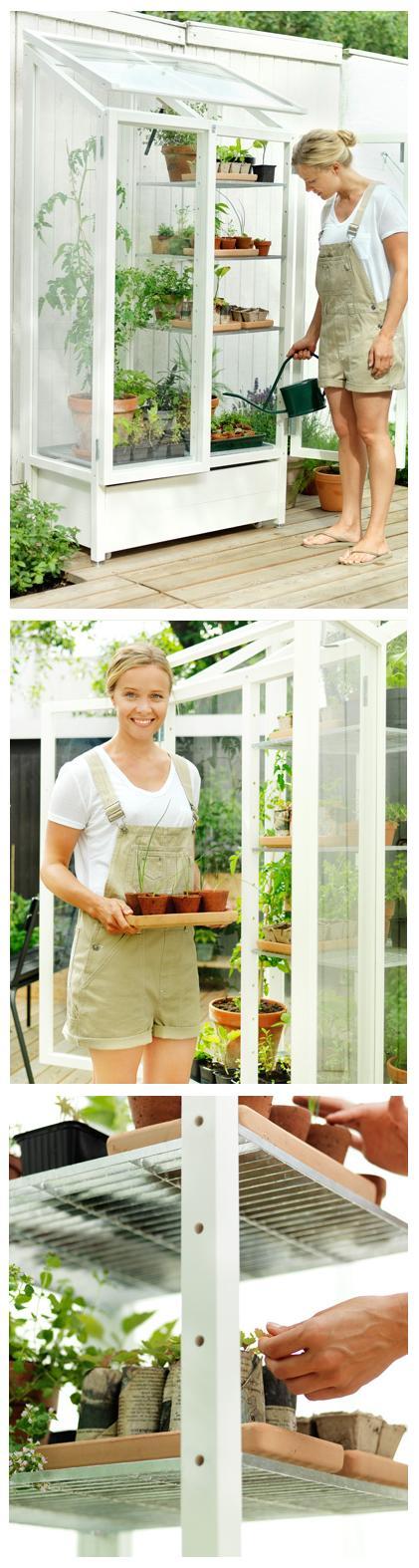 Amazing mini-greenhouse