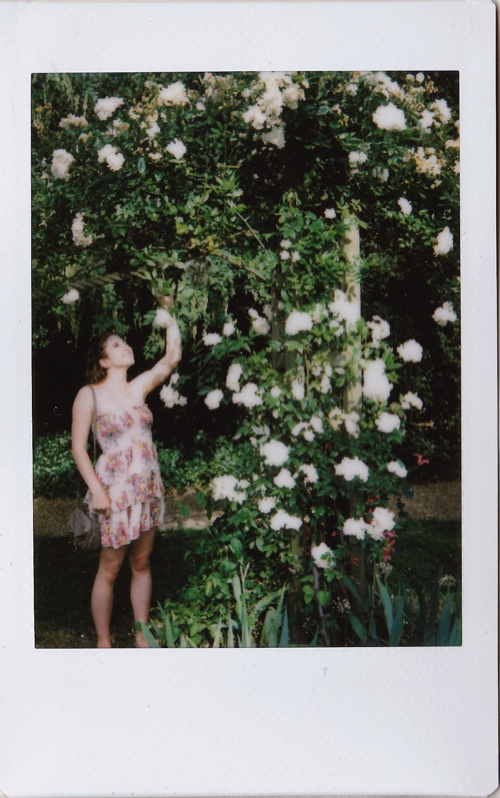 polaroid of flowers