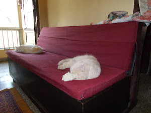Tuesday(22-12-2015) :- Luxurious cat lives.