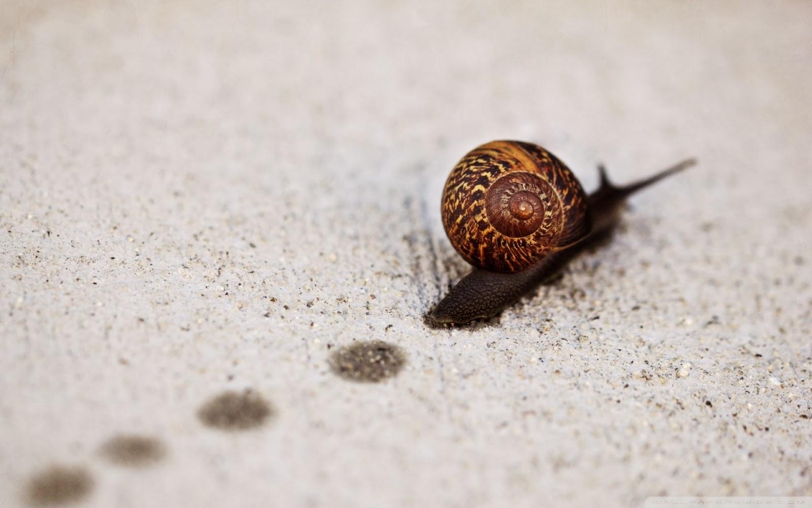 """<img src=""""http://4.bp.blogspot.com/-9AI2tEhLK24/UuJPC-5b1iI/AAAAAAAAKCo/w5jzkwfVYPs/s1600/snail_track_macro-wallpaper-1920x1200.jpg"""" alt=""""snail track macro wallpaper"""" />"""