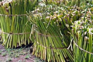 Cara mengolah dan membuat kerajinan dari tanaman eceng gondok