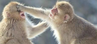 funny picture of monkeys fight