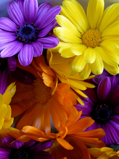 Flowers 240x320 Mobile Wallpapers 1
