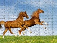 Horses romp