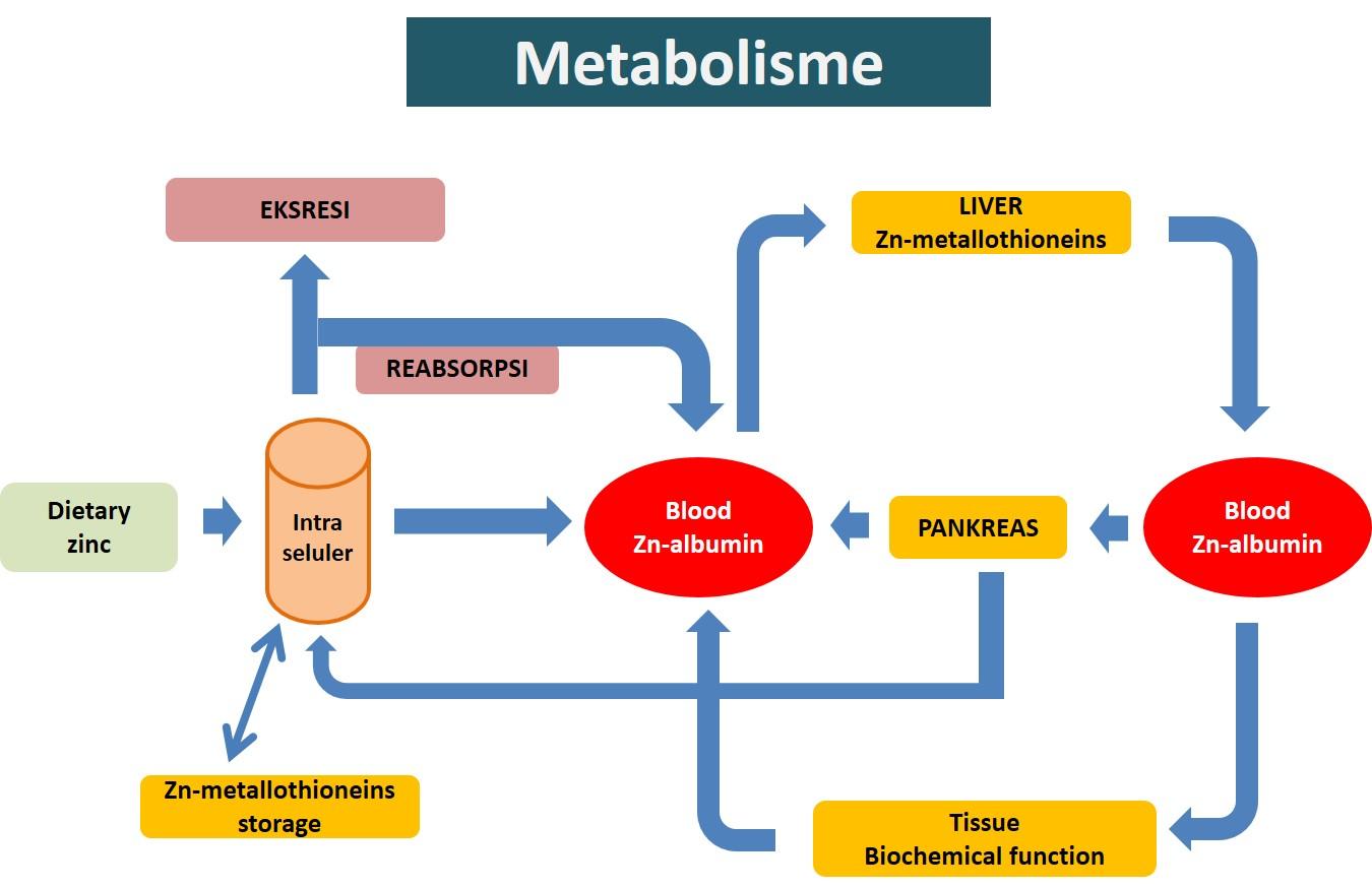 5 Penyebab susah gemuk
