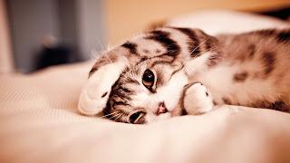 Gatito de ojos dorados
