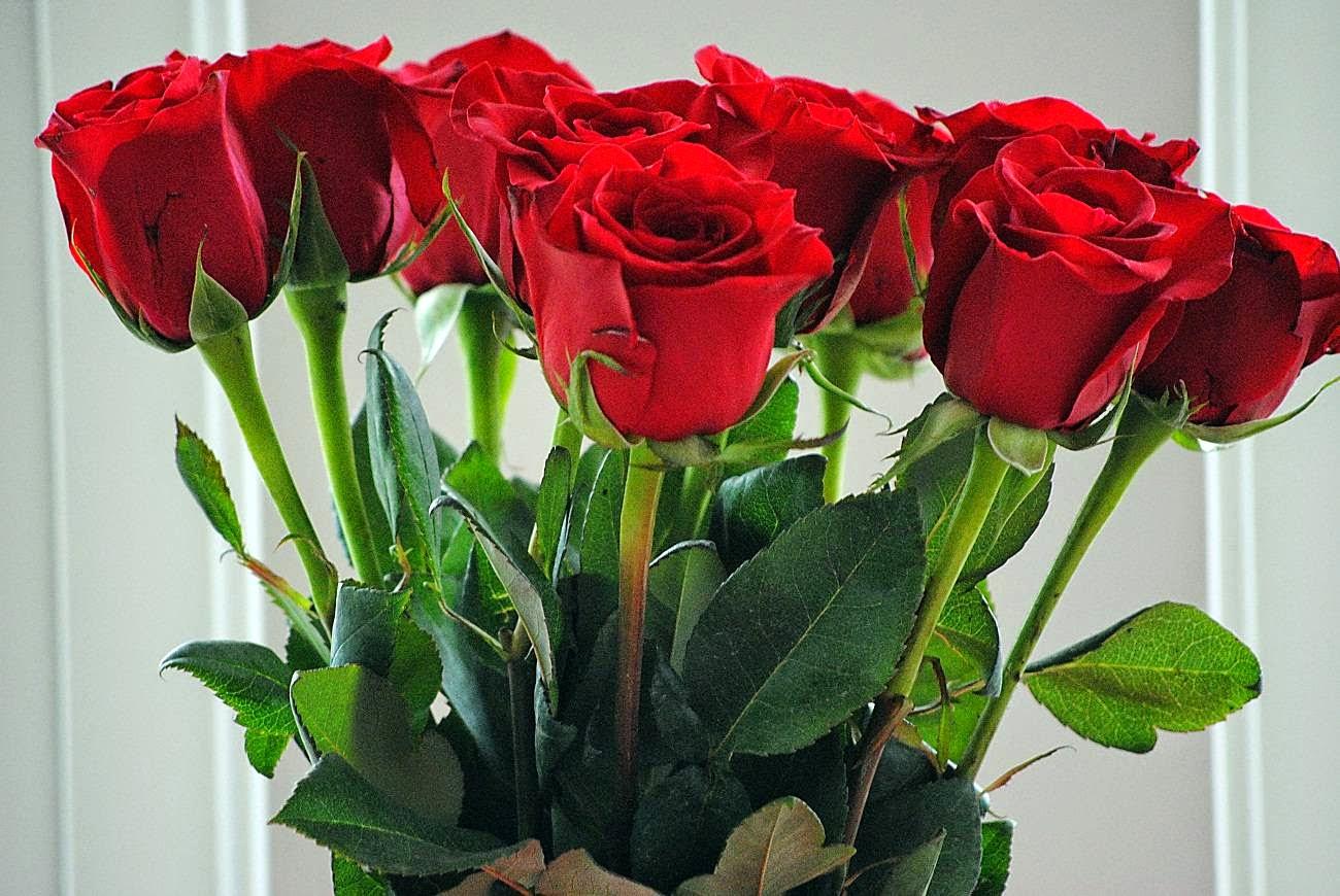 Sensaciones cu l es el significado del color de las rosas - Significado de los colores de las rosas ...