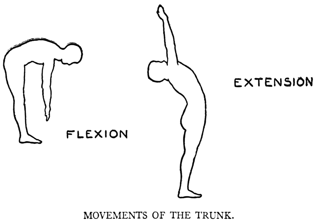 fleksion og ekstension