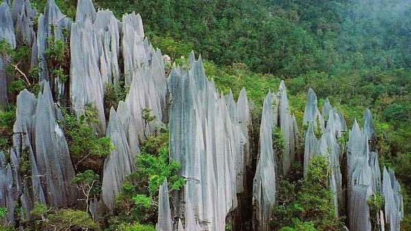 Gunung Mulu National Park Malaysia