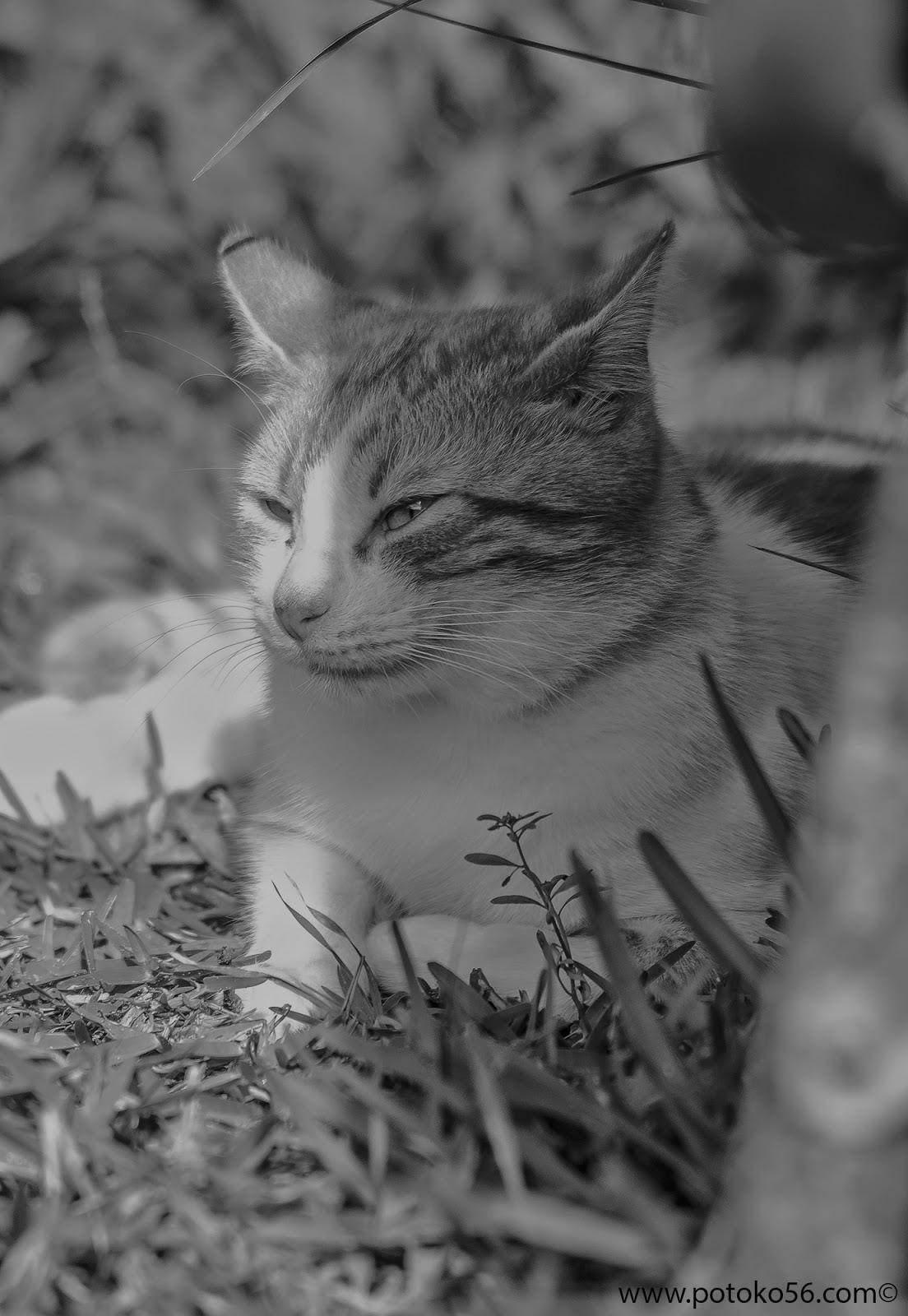 uno de los gatitos que había por el campo de Rota