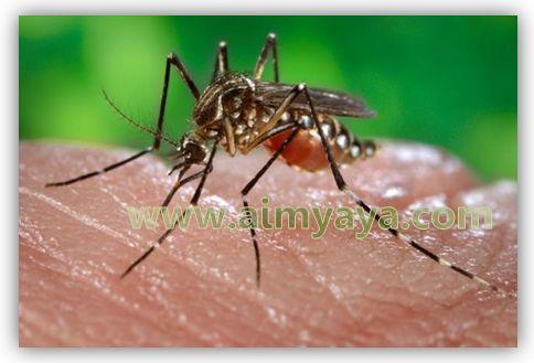 Gambar: Gigitan Nyamuk