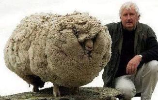 Tony Berbece 🔴 Ce învățăm de la oița rătăcită