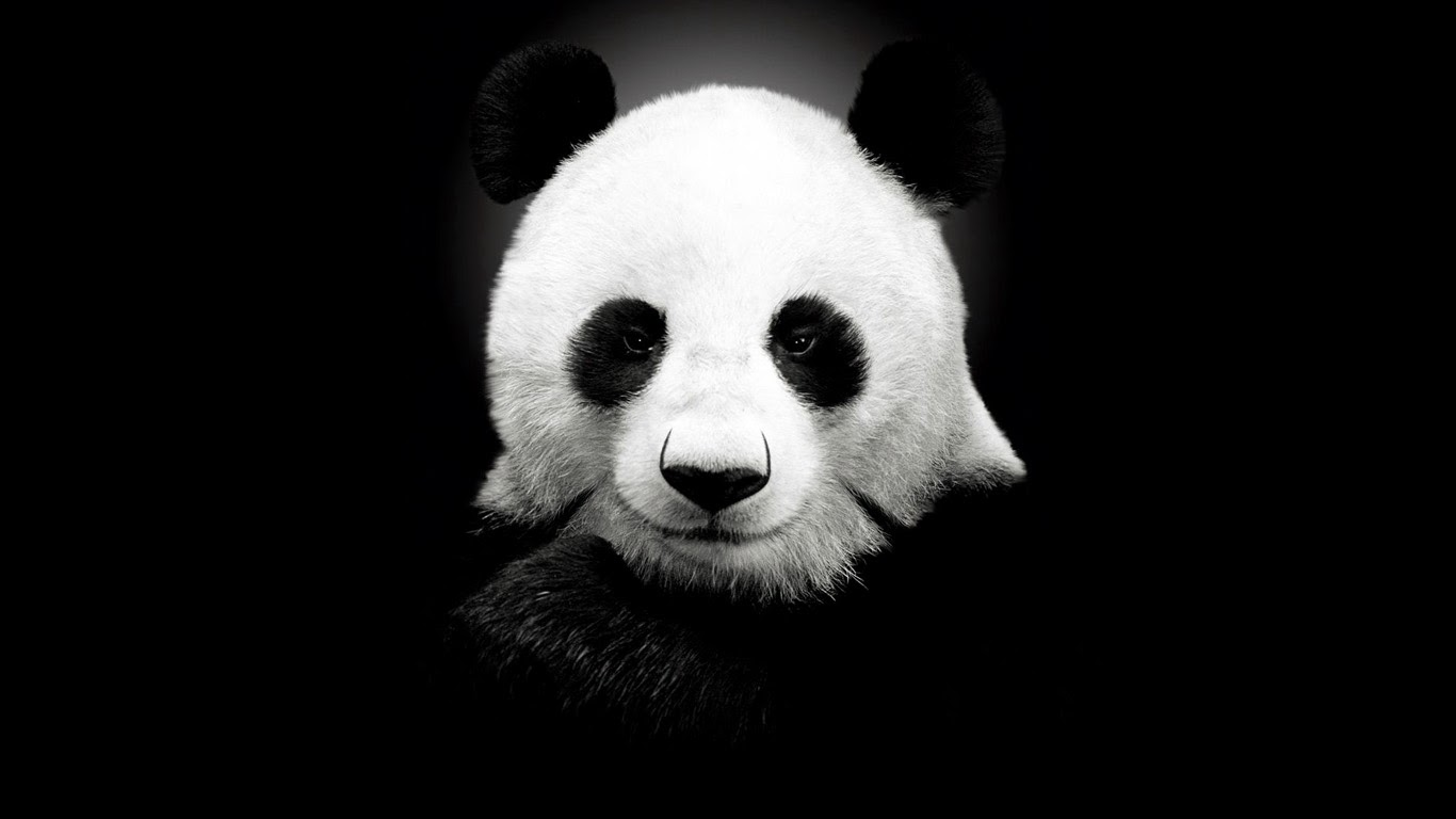 Good   Wallpaper Home Screen Panda - Panda-Full-HD-Wallpaper  Image_126617.jpg