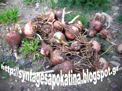 άγριοι βολβοί http://syntagesapokatina.blogspot.gr