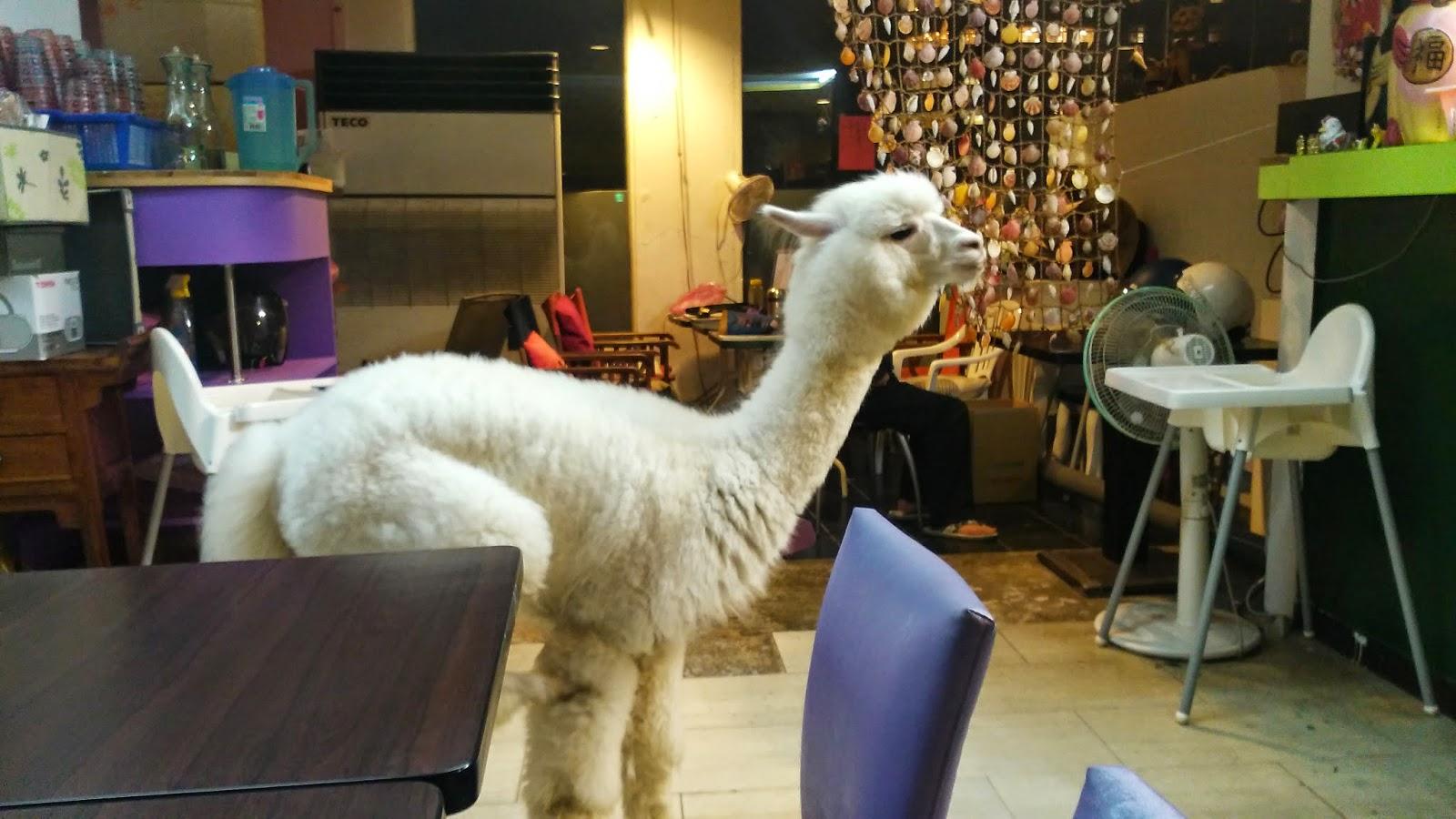 Phantasia Taiwan Alpaca Cafe Amp Danshui