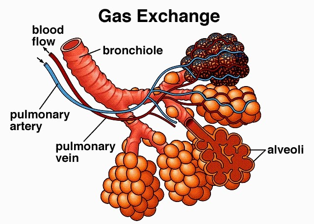 gas exchange Buy a gas exchange t-shirt today, and it ships within 24 hours and comes with a 30-day money-back guarantee choose from thousands of gas exchange shirt designs for men, women, and children which have been created by our community of independent artists and iconic brands.