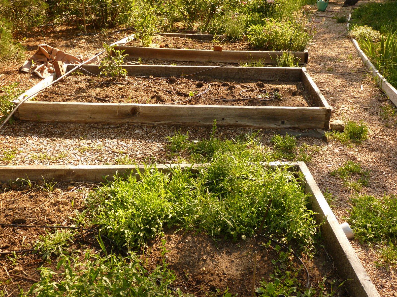 Where Mountains Meet Prairie: The pathetic vegetable garden