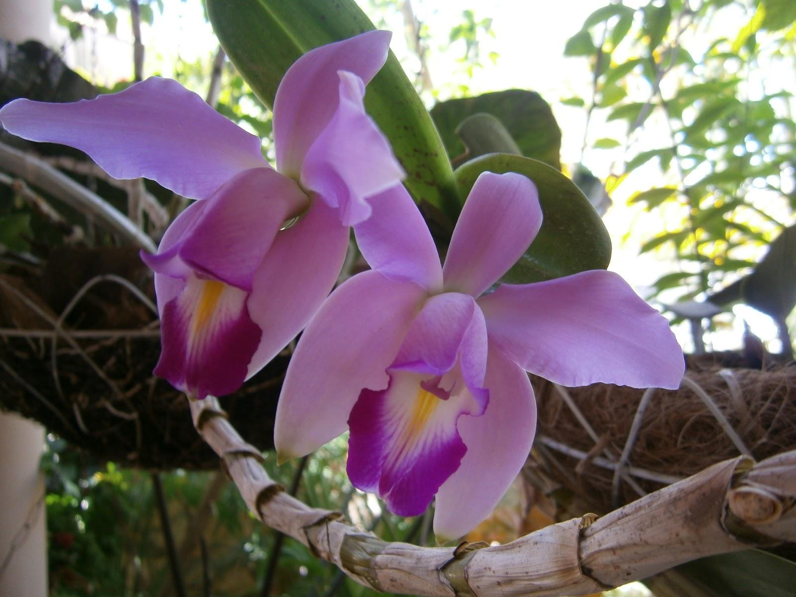 Orquídeas: principais espécies e segredos para cuidar das