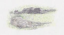Sleeping Foals
