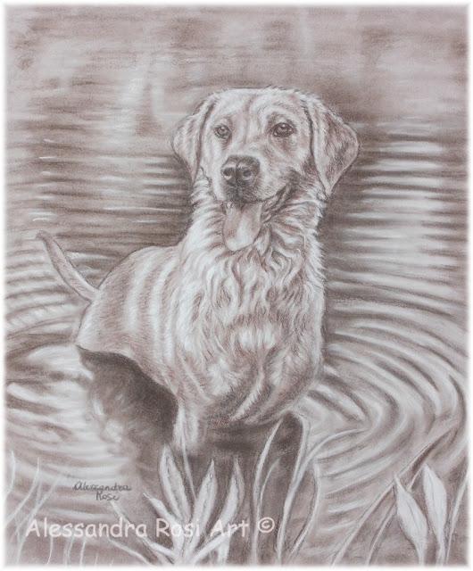 Pet portrait drawing in sepia pencils, sepia portrait