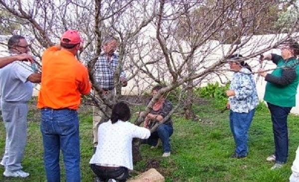 El taller de poda de frutales tendrá lugar el domingo 29 de junio de 2014, de 9 a 18 horas, y consistirá de una presentación teórica y trabajos prácticos ejecutados sobre los árboles frutales del parque y la huerta de Grigadale (Partido de Lobería, Provincia de Bs. As.) - Jardines al Sur