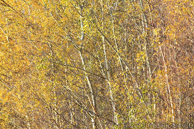 nature arbre automne abstrait Seine-et-Marne