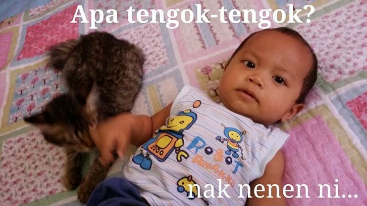 Kucing sembuhkan penyakit, bunyi kucing, kucing purr, cat purring, dengkur kucing, sayang kucing, cat's lover, saya sayang kucing, Shaklee Kedah, Shaklee Alor Setar, pengedar Shaklee bertauliah, SID