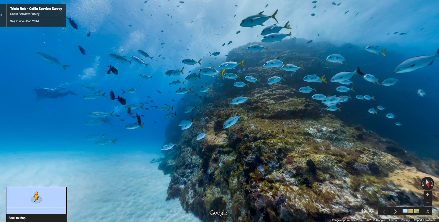 Google street view now covers brazilian islands even for Fish swimming video