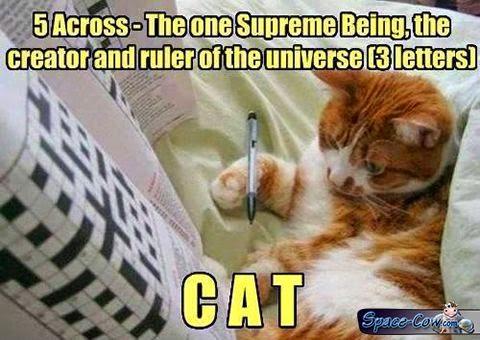 funny cat animals humor