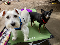 Our Happy Owners <br> Elmer &amp; Chewy