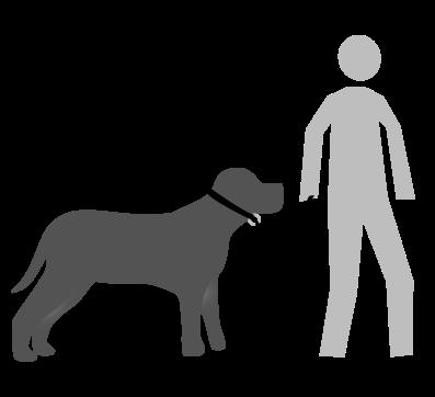 ¿como pasear a mi perro? Articulo de Familia Canina
