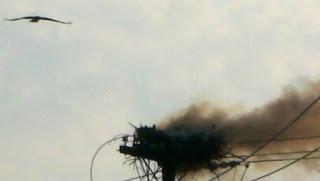Mother Osprey Seeks Help
