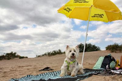 playa para perros Girona
