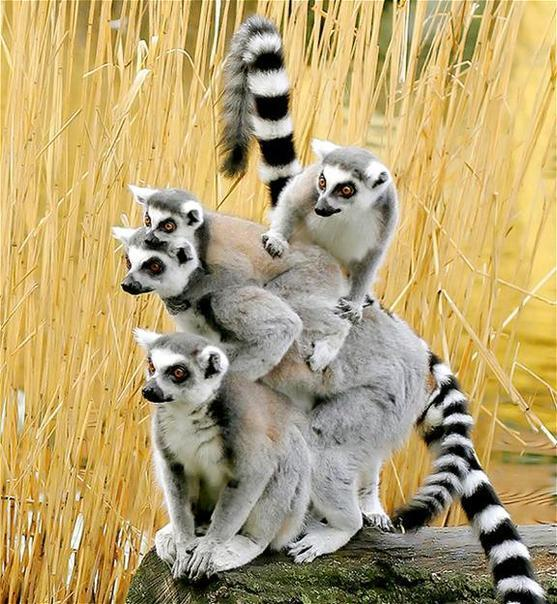 Hình ảnh động vật cực đáng yêu