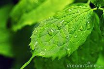 RAIN Y