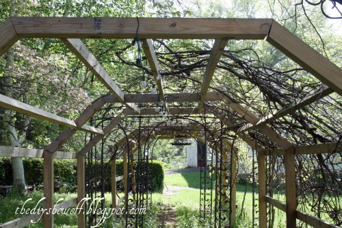 Grape Arbor Archives Diy Show Off Diy Decorating And