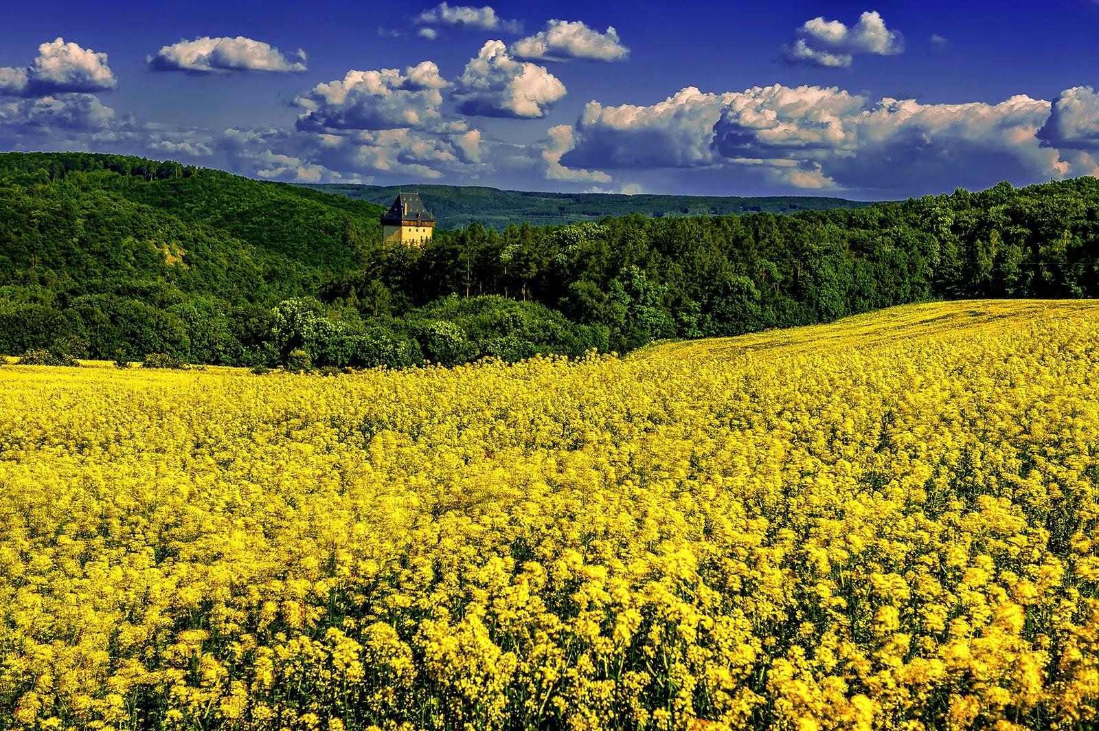 Karstejn, Czech Republic, Karlstejn Castle, Rapeseed, field