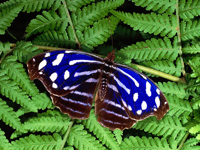 Beautiful Butterfly Normal Resolution Wallpaper 24