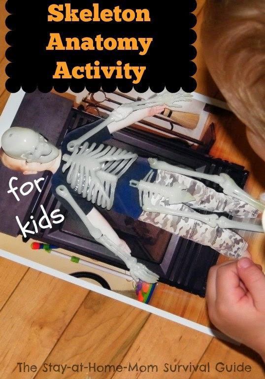 Exploring the anatomy of the skeleton using your child's own picture and free printable skeleton worksheets. Great for preschool and early elementary kids.