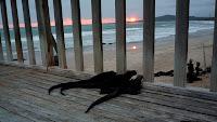 Iguanas watching the sunset at Puerto Villamil, Isabela Island, GalapagosIguanas watching the sunset at Puerto Villamil, Isabela Island, Galapagos
