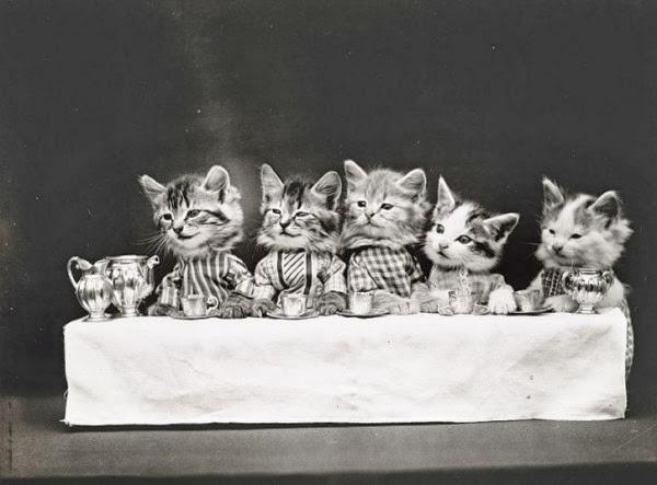 Для создания портретов он сперва переодевал кошек и собак, а потом ставил их с сопровождающим реквизитом в человеческие ситуации.