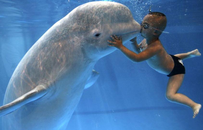 Animal You: Beluga Whale