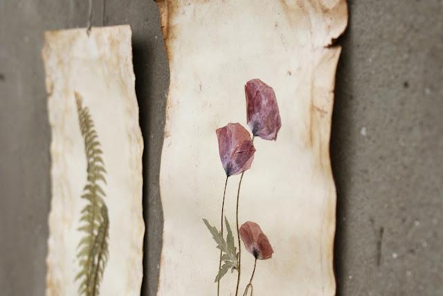 suszone rośliny, botanika