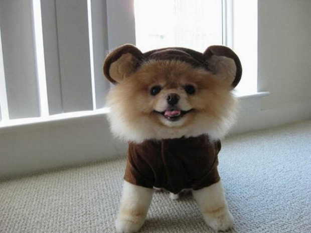 Cute dogs - part 82, cute dog photos, funny dogs, best dog pictures