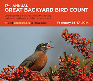 The Great Backyard Bird Count: Feb 14 -17, 2014