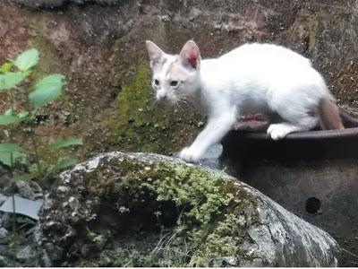 Foto-Foto Anak Kucing Lucu di Luar Jendela Kamar Kost Gue 05