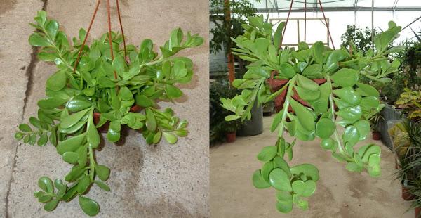 Viveros vangarden mayo 2014 - Plantas de exterior resistentes al frio y al calor fotos ...
