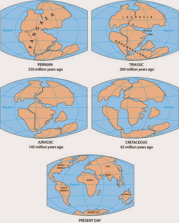 PALAEONTOLOGY[online] | Article: Fossil Focus > Fossil Focus ...
